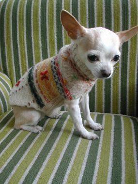 ... para aprender como hacer ropa para perros reciclando un sweater