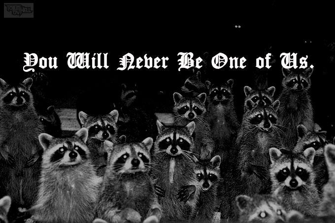 raccoon nails