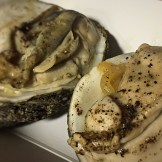 grilled oyster and onion soubise