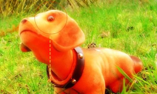 TTR003 – Doggy 01 (KPHB – 2005)