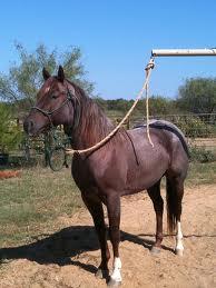 cowboy4sale.com, cowboy4sale, tomtra, horses, stud