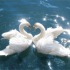 Top 5 Amazing Animal Mating Rituals
