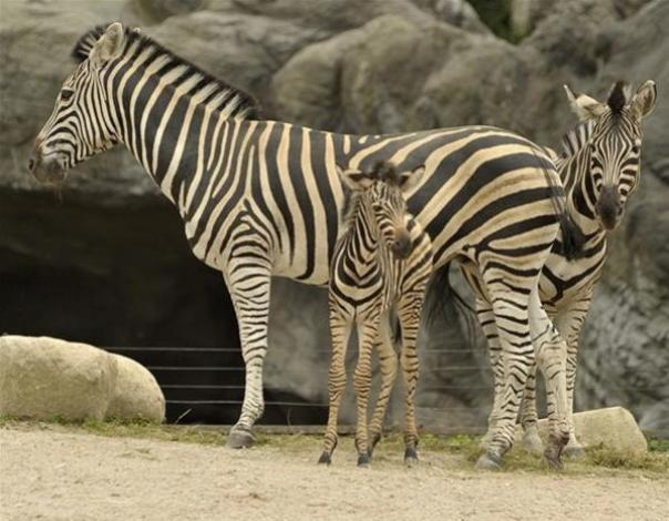 Top 10 Baby Animals From Zoos of the World8