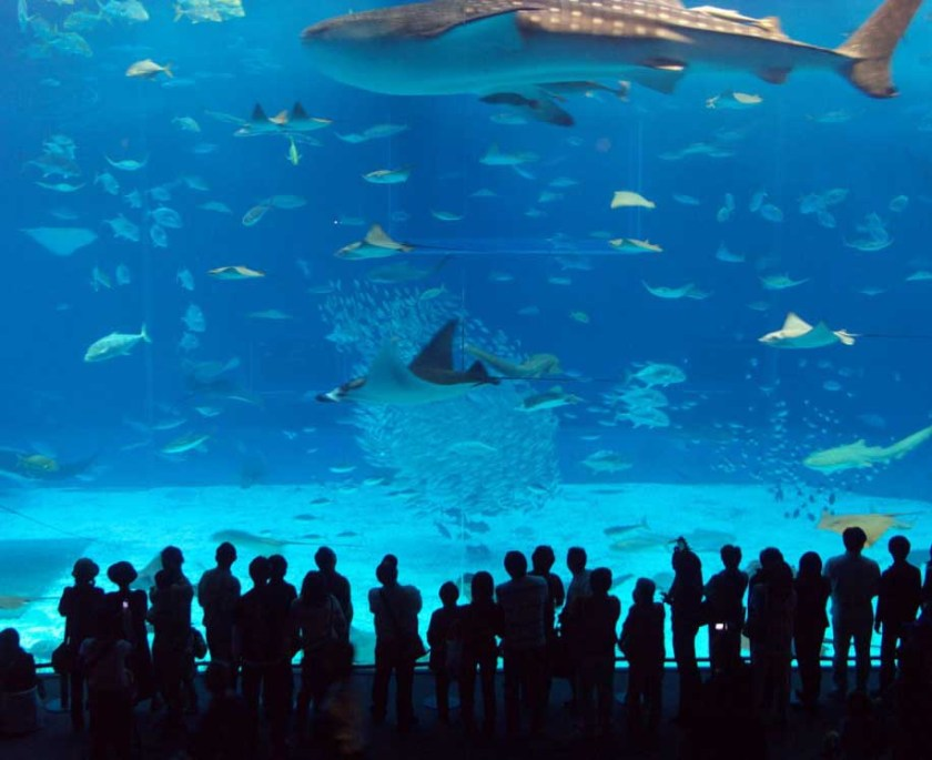 Top Five Most Amazing and Best Aquariums in the World