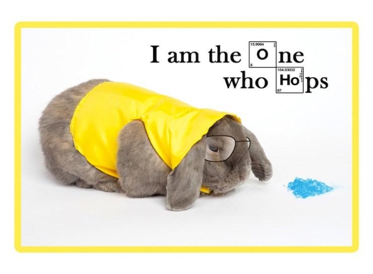 Say My Adorable Bunny Name!