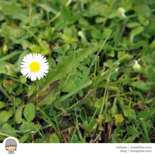 LTieu-flower