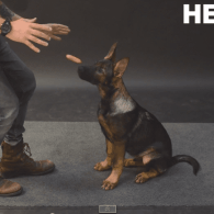 Dogs React to Magically Levitating Wiener: VIDEO