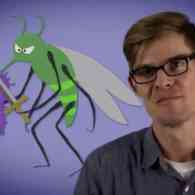 Joe Hanson Reveals The Most Annoying (And Deadliest) Animal On Earth: VIDEO