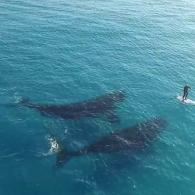 Paddle Boarding with whales