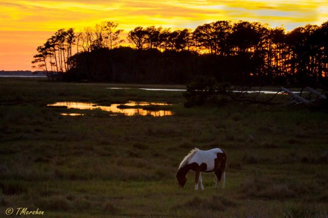 Sunset at Chincoteague NWR