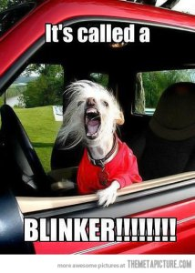 Use-your-blinker-dog