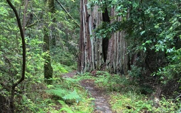 Saturday, October 8, 2016 - Portola Redwoods State Park
