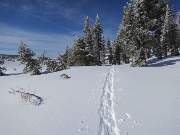 Trail above Round Valley
