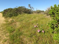 Wildflowers on Montara Mountain