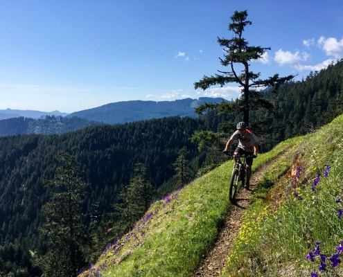 Gabe enjoying wildflowers (and fast downhill, of course) on Alpine Trails.