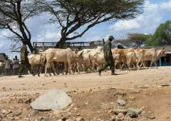 Drivers of pastoralist violence in northwestern Kenya