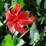 Blume in Costa Rica Surfcamp