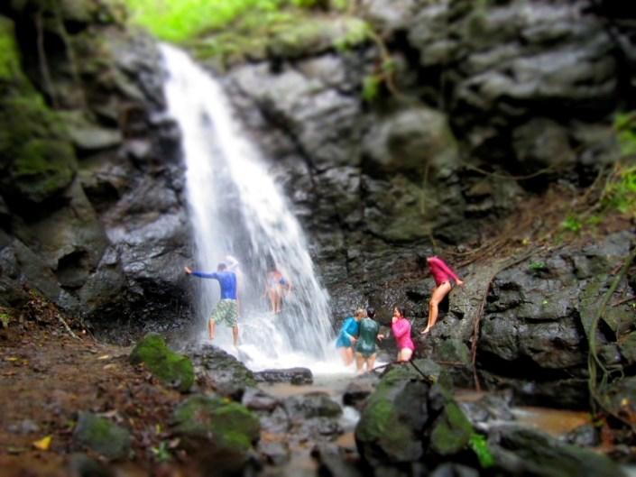Costa Rica Urwald Natur