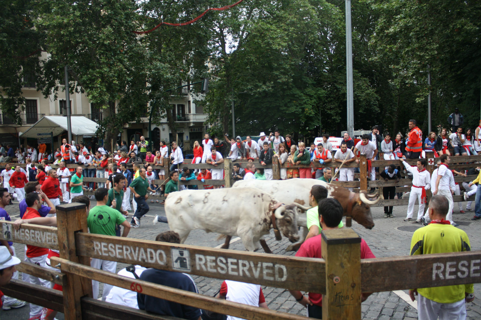 Surviving the running of the bulls