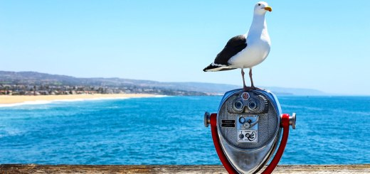 This gull posed for a postcard-perfect view from the pier at Newport Beach