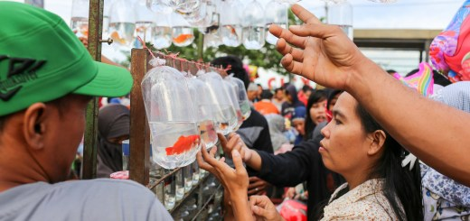 Shopping for goldfish at the Sunday market on Pantai Losari, Makassar