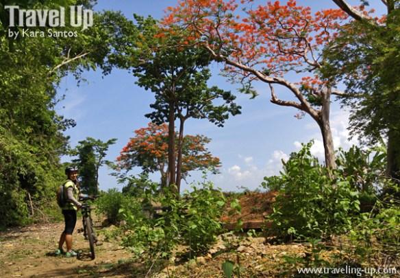 corregidor island philippines jungle trail fire trees