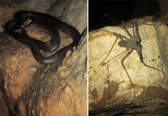 11. calbiga cave samar snake cricket