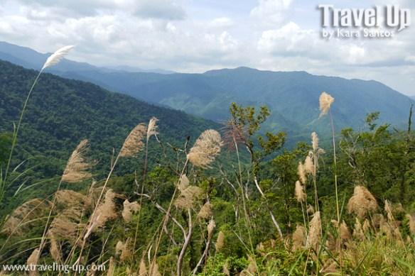 10. marifanta marikina-infanta highway landscape weeds