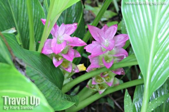 16. antique rice terraces philippines flowers trail