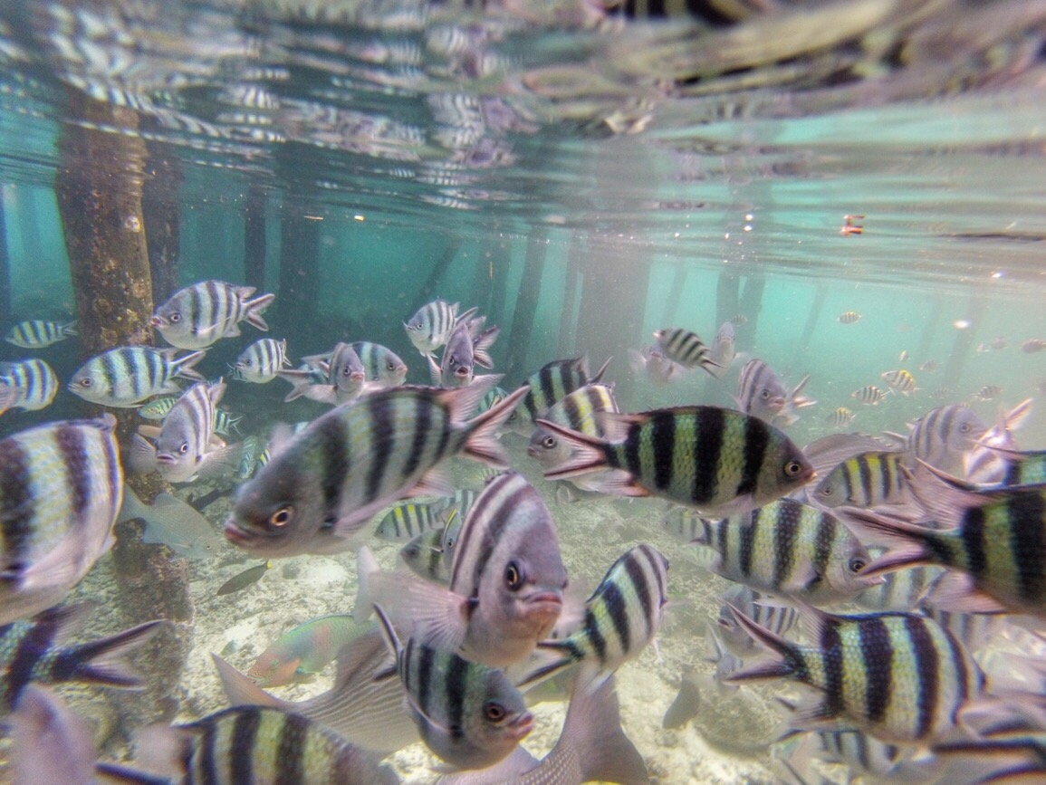 Top 10 things to do in Raja Ampat, Indonesia