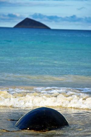 Sea turtle in  Floreana in Galapagos islands