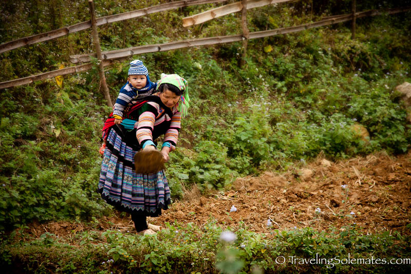 Flower Hmong Woman and Baby working in the field - Trekking in the Hillribe Villages around Bac Ha, Vietnam