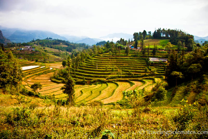 Rice Terraces in the Hillribe Villages around Bac Ha, Vietnam