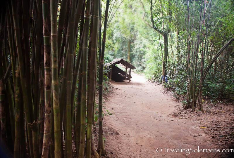 Reforestration, Cu Chi Tunnels, Vietnam