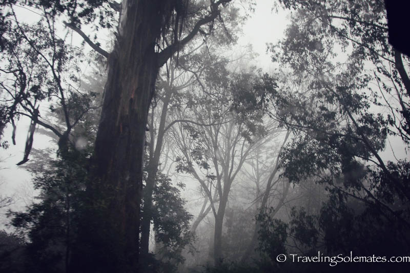 Blue Dandenong Range, Victoria, Australia