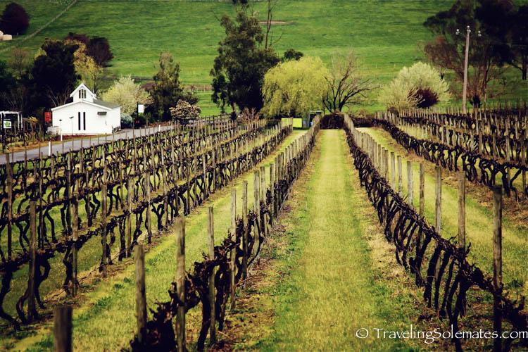 Ferguson Winery, Yarra Valley, Victoria, Australia