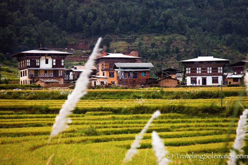 Rice paddies and houses along he Hike to Chimi Lakhang, Punakha Valley, Bhutan