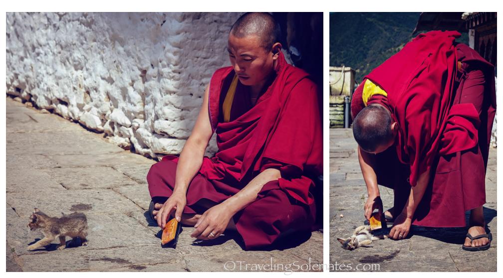 -Monk and Cat, Trongsa Dzong, Bhutan