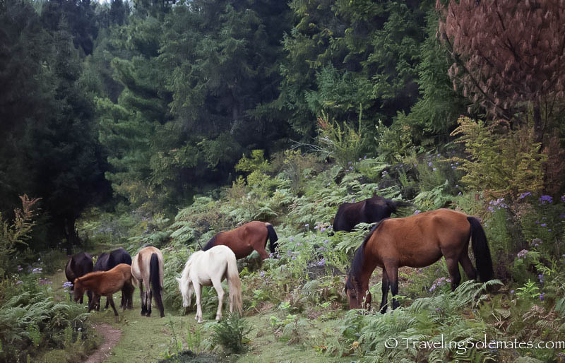 Horses along Hiking Trail in Ura Valley, Bumthang, Bhutan