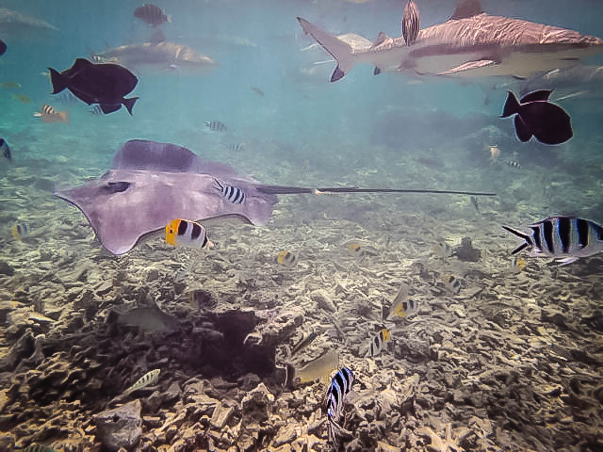 Snorkeling during Lagoon Safari in Bora Bora, French Polynesia, South Pacific