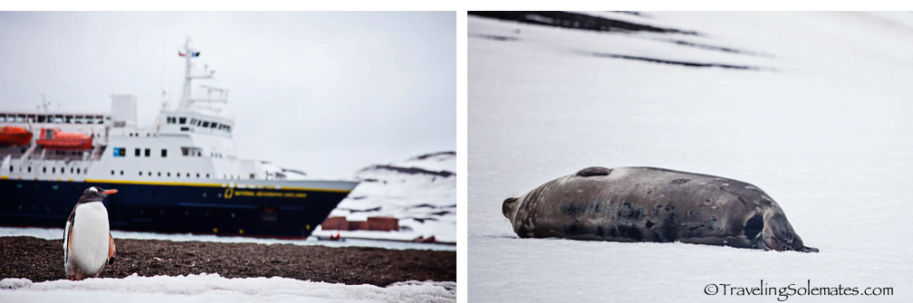 Penguins and seals in Deception Island, National Geographic Explorer, Antarctica Expedition