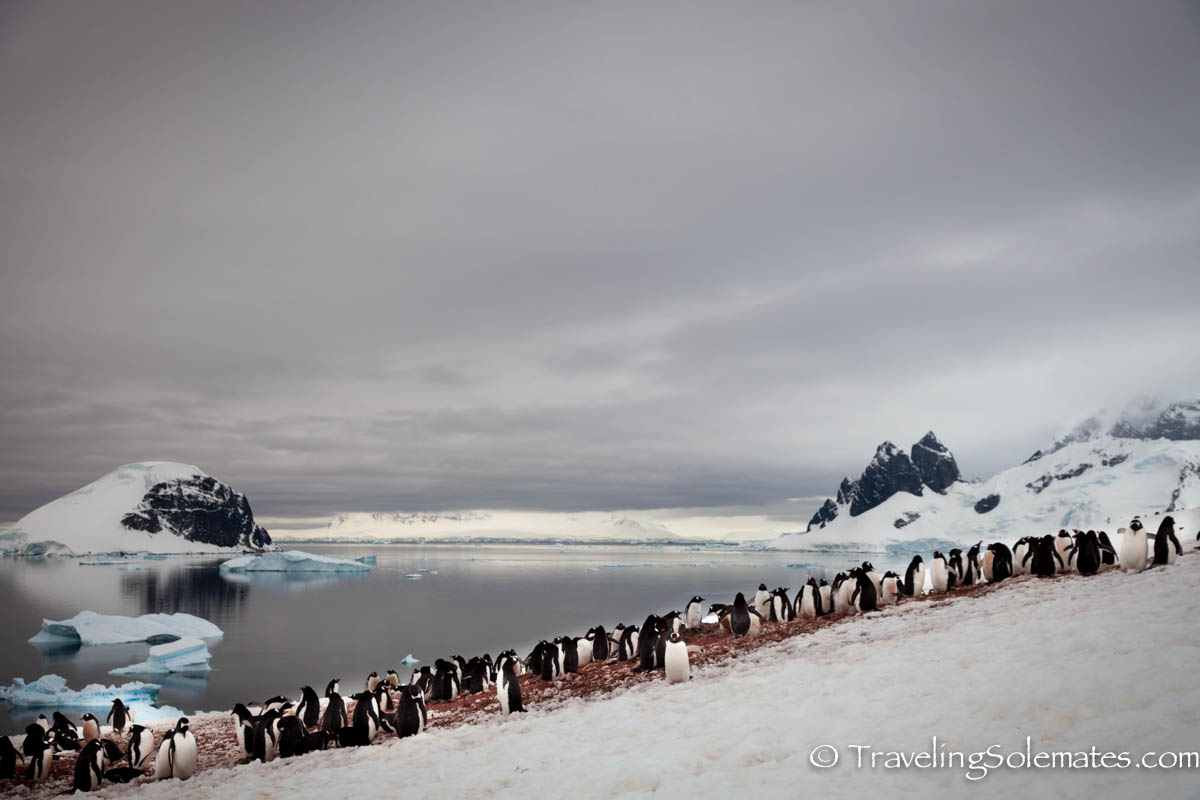 Penguin Colony in Danco Island, Antarctica, National Geographic Explorer, Linblad Expeditions