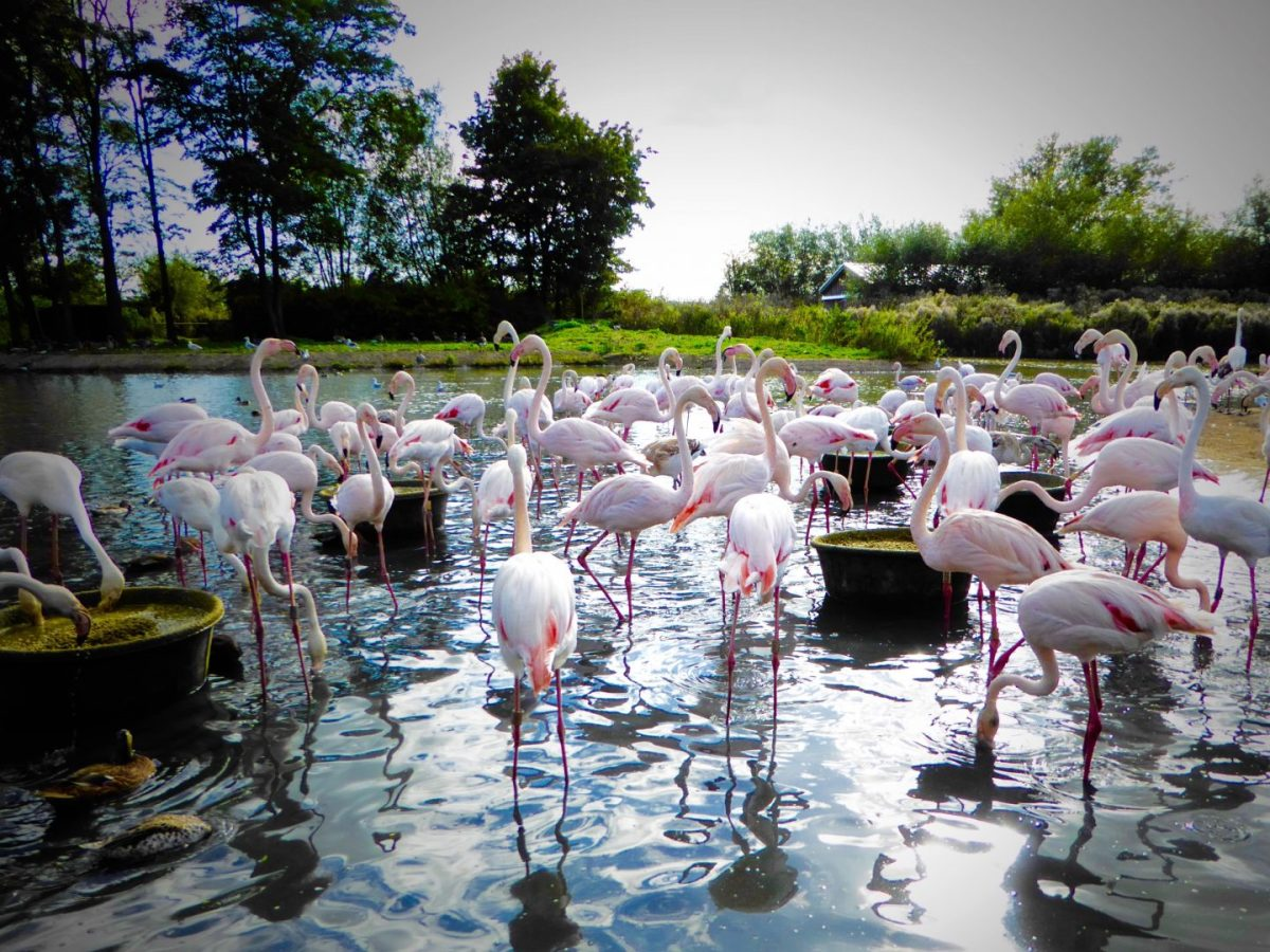 Top tips for visiting WWT Slimbridge