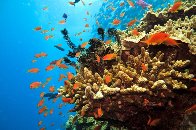 Great Barrier Reef and Yongala wreck, Australia