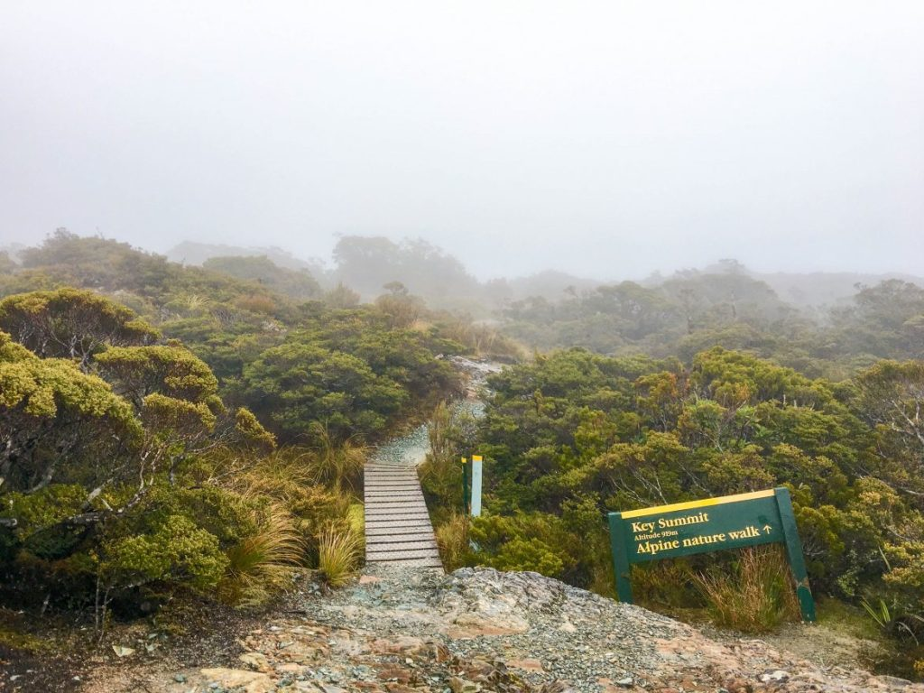NZ-0728