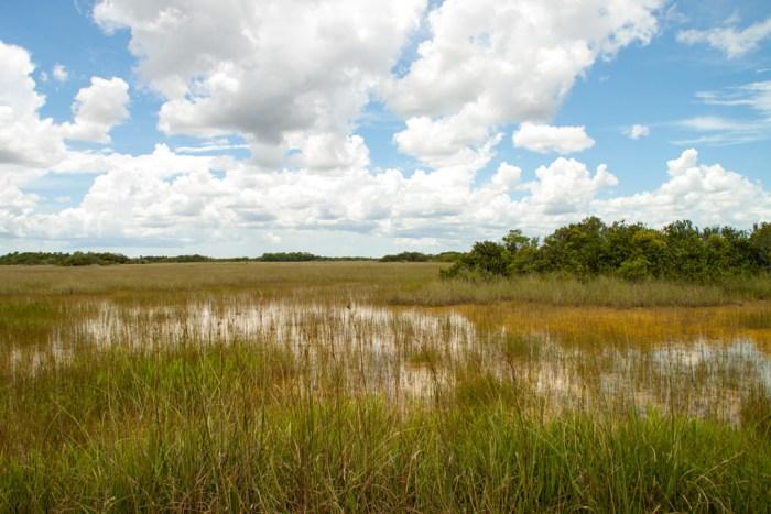 Everglades_Landschaft