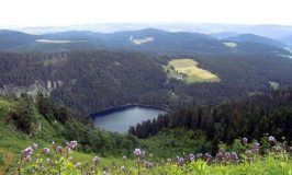 A Holiday in the Black Forest (Schwarzwald)