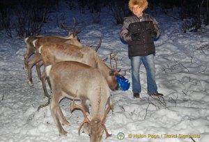 Reindeer Park and Sami Guine