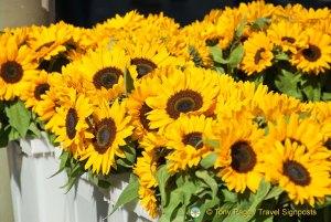 Sunflowers in Madeira