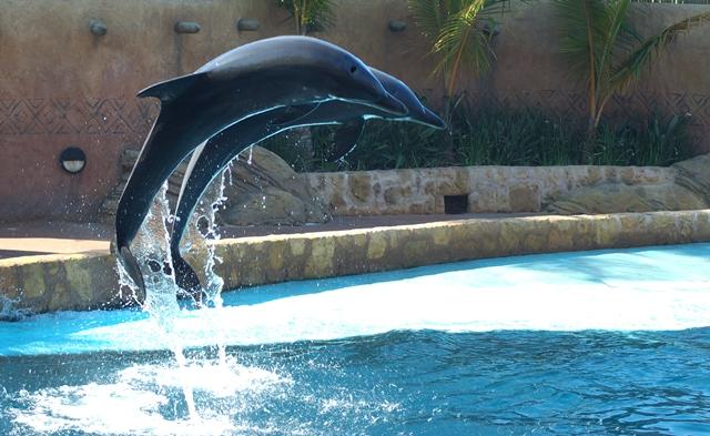 dolphin flight